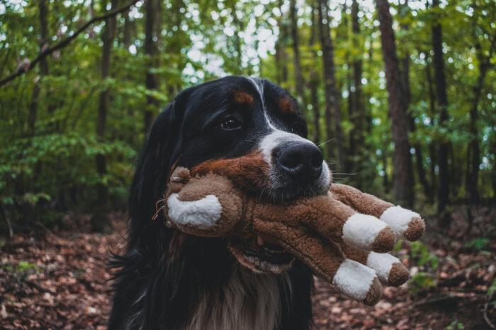 6 Διαδραστικά Παιχνίδια για Σκύλους